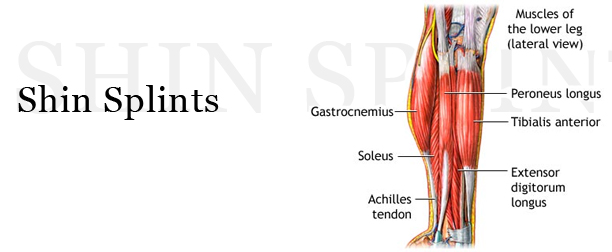 shin splints or compartment syndrome? | boston bodyworker, Human Body