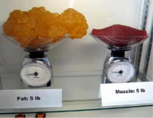weigh fat