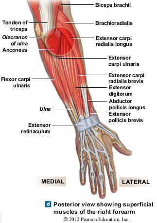 What Is Tennis Elbow Boston Bodyworker